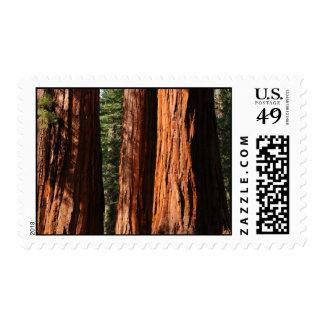 Yosemite Sequoias Postage