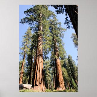 Yosemite Sequoias Poster