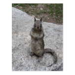 Yosemite Squirrel Postcard