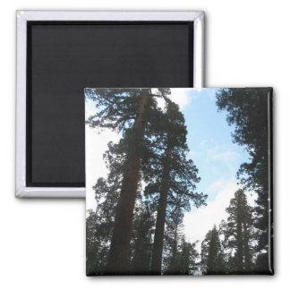Yosemite Trees 2 Inch Square Magnet