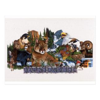 Yosemite Wildlife Postcard