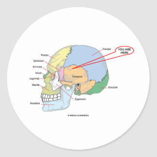 You Are Here (Brain Temporal Region Anatomical) Classic Round Sticker