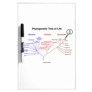 You Are Here Phylogenetic Tree Of Life (Biology) Dry-Erase Board