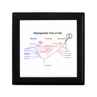 You Are Here Phylogenetic Tree Of Life (Biology) Trinket Box