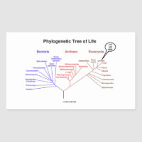 You Are Here Phylogenetic Tree Of Life (Biology) Rectangular Sticker