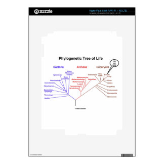 You Are Here Phylogenetic Tree Of Life (Biology) Skin For iPad 3