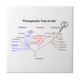 You Are Here Phylogenetic Tree Of Life (Biology) Tile