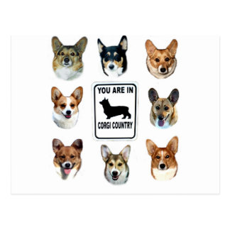 You Are In  Corgi Country Postcard