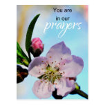 You are in Our Prayers Church Congregation Postcard
