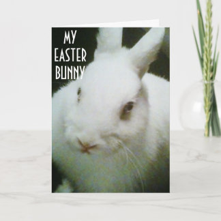 """YOU ARE """"MY"""" EASTER BUNNY HOLIDAY CARD"""