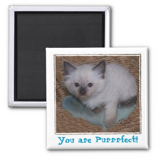 You ARE Pur-r-r-fect Magnet