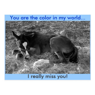 You are the color in my world postcard