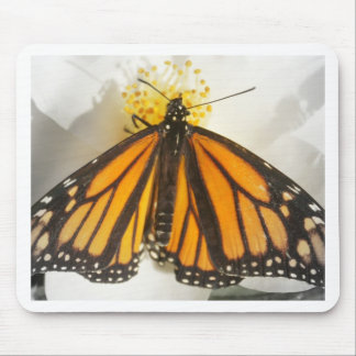 You brighten my world! butterfly mouse pad