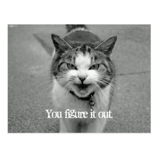 """You figure it out"" Crabby Cat Postcard"