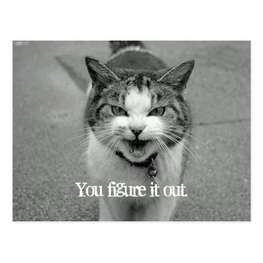 """You figure it out"" Crabby Cat Postcard Postcard"
