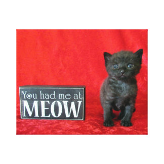 You Had Me At Meow - Pepper (aka Jelly Bean) Canvas Print