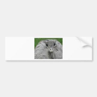 You Lookin' at Me Bumper Sticker