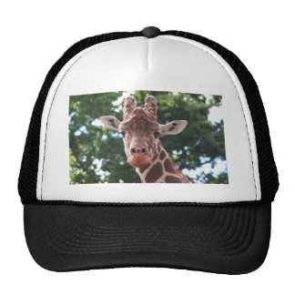You looking at me hats