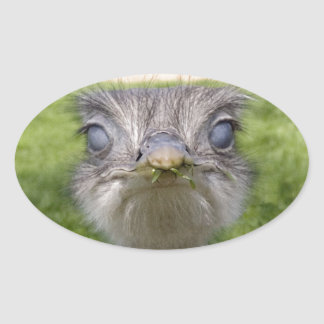 You looking at me? oval sticker