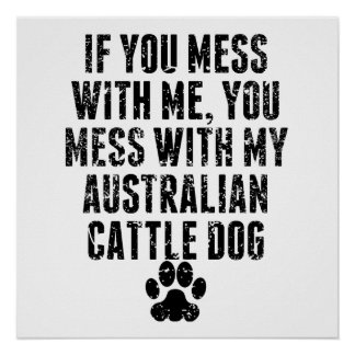 You Mess With My Australian Cattle Dog Poster