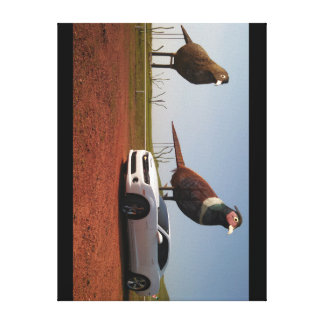 You might be a Ringneck Canvas Print