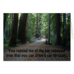 You remind me of the big redwood tree greeting card