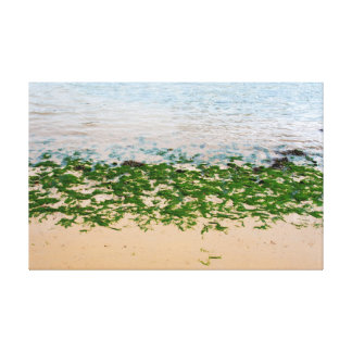 Youghal bright green seaweed canvas print