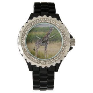 Young African Giraffe in Kenyan Savannah Wristwatch
