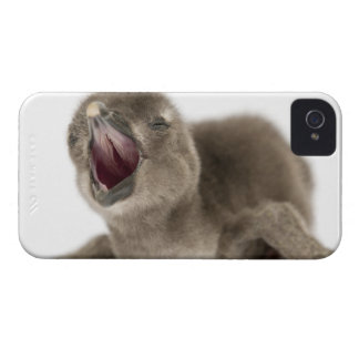 Young African Penguin - Spheniscus demersus. iPhone 4 Cover