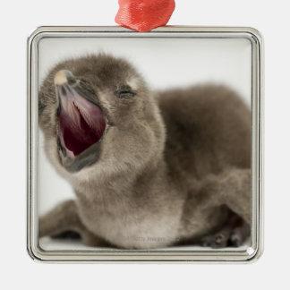 Young African Penguin - Spheniscus demersus. Metal Ornament
