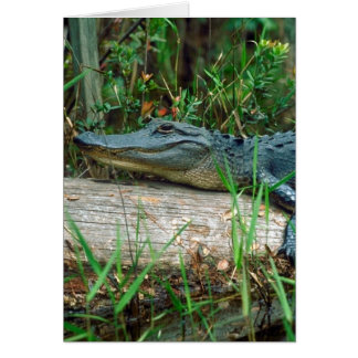 Young Alligator Card