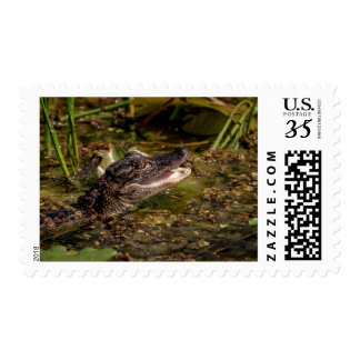 Young Alligator Postage