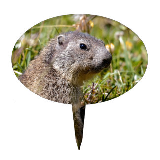 Young Alpine marmot in grass Cake Topper