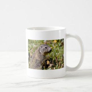 Young Alpine marmot in grass Coffee Mug