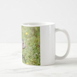 Young Alpine marmot in grass Coffee Mugs