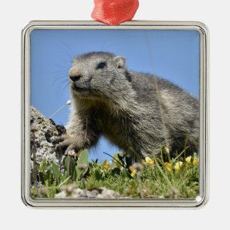 Young Alpine marmot Metal Ornament