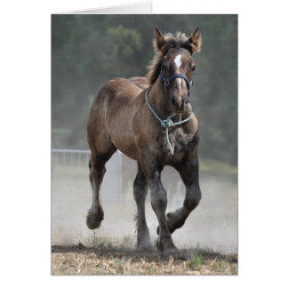 Young Ardennes horse trotting birthday Card