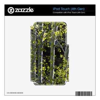 Young Aspen Trees Decal For iPod Touch 4G