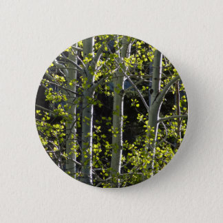 Young Aspen Trees Pinback Button