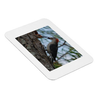 Young, Awesome Mother Woodpecker Rectangular Photo Magnet