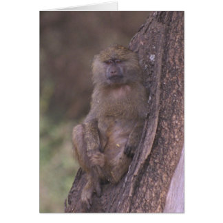Young Baboon Card