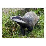 Young Badger Card