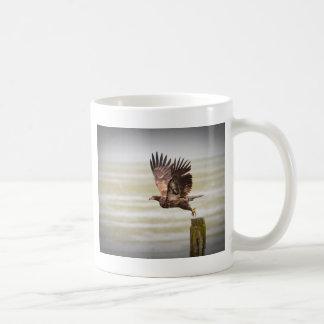 Young Bald Eagle Coffee Mugs