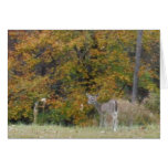 Young Bambi Deer with fall trees. Cards