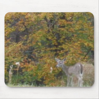 Young Bambi Deer with fall trees. Mouse Pad