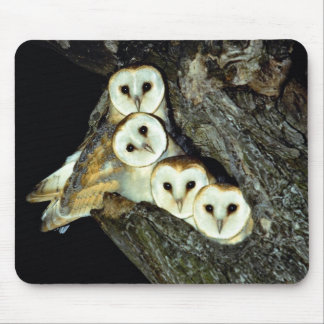 Young barn-owls, 9 weeks old mouse pad