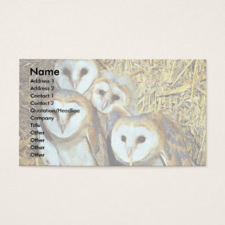 Young barn-owls business card