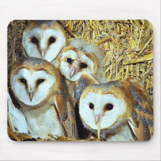 Young barn-owls mouse pad