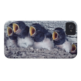 young barn swallows iPhone 4 case