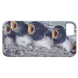 young barn swallows iPhone 5 cover